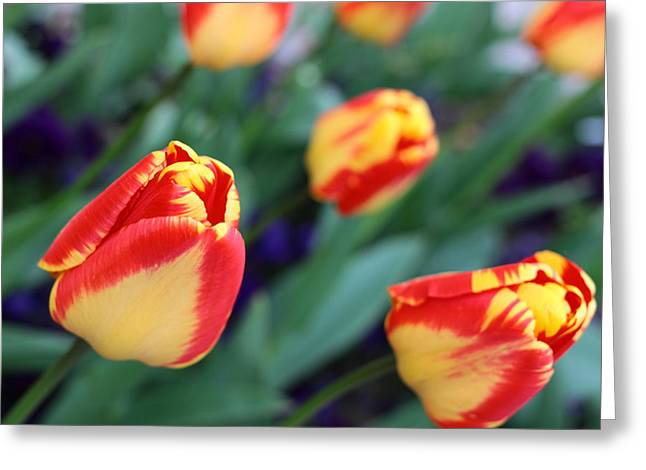 Impression Of Yellow-red Tulips Greeting Card by Rusalka Koroleva