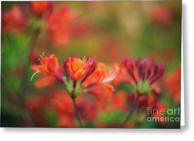 Impressionist Azaleas Colors Greeting Card by Mike Reid