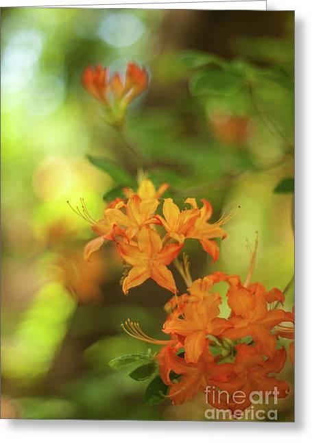 Impressionist Orange Azaleas Greeting Card by Mike Reid