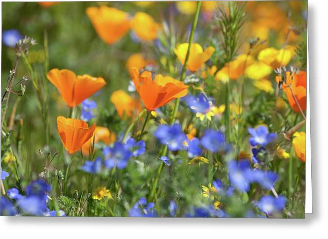Greeting Card featuring the photograph Impressionist Wildflowers by Cliff Wassmann