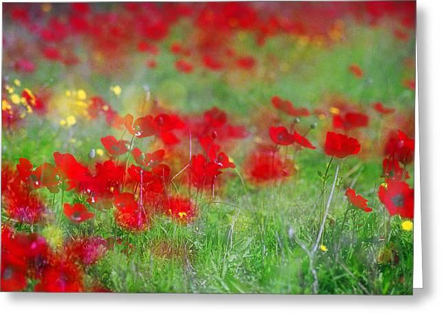 Impressionistic Blossom Near Shderot Greeting Card
