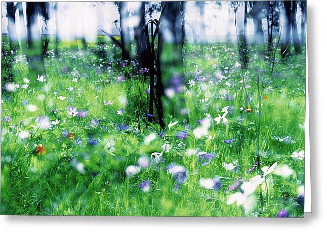 Impressionistic Photography At Meggido 1 Greeting Card