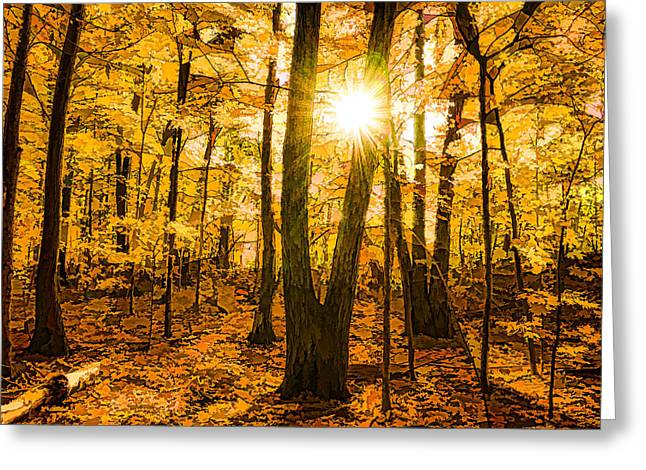 Impressions Of Forests - Sunburst In The Golden Forest  Greeting Card by Georgia Mizuleva