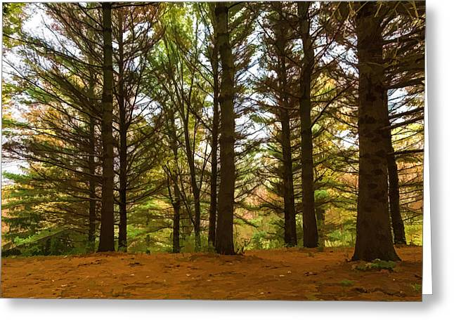 Impressions Of Forests - Through The Lace Of Pine Branches Greeting Card