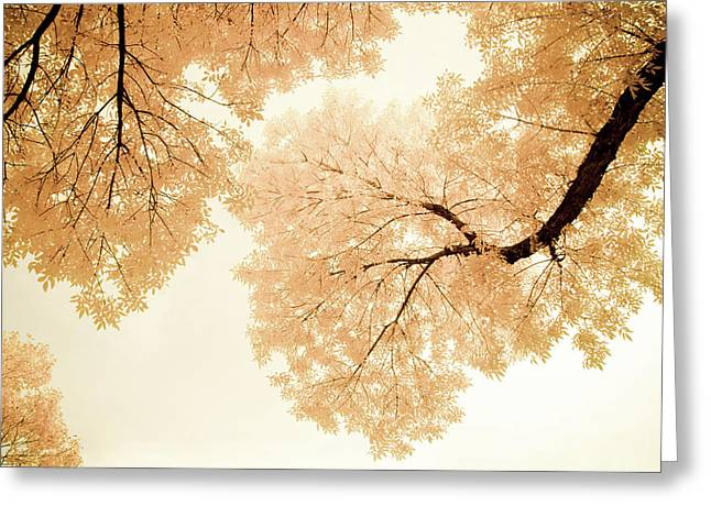 Impressions Of October Greeting Card