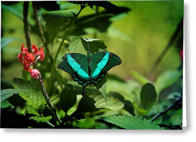 In A Butterfly World Greeting Card by Milena Ilieva