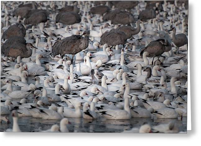 Greeting Card featuring the photograph In A Crowd - The Bosque by Britt Runyon