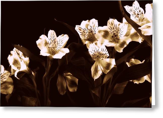 In A Line Greeting Card by Diane Reed