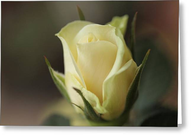 In A Quiet Corner Greeting Card by Connie Handscomb