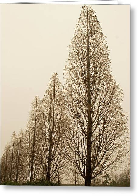 In A Row Greeting Card by Elvira Butler