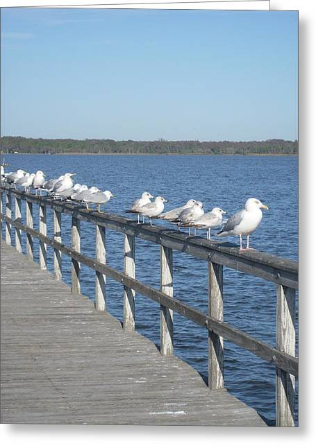 In A Row Greeting Card by Warren Thompson