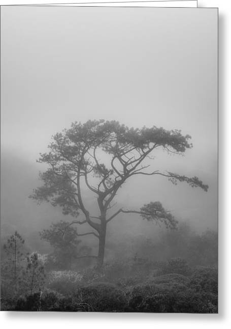 In A Soft Fog Greeting Card by Joseph Smith