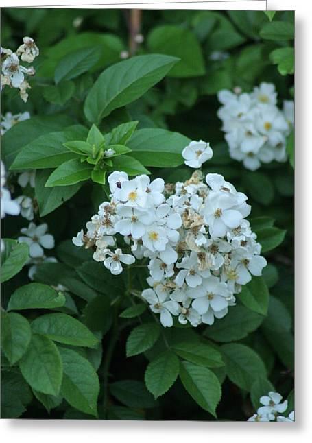 In Bloom Greeting Card by ShadowWalker RavenEyes Dibler