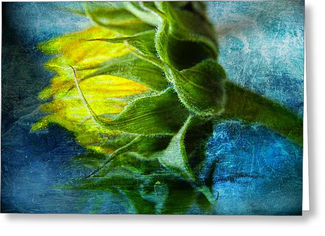 In Blue Greeting Card by John Rivera