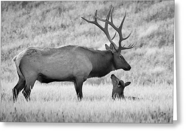 Greeting Card featuring the photograph In Charge by Kelly Marquardt