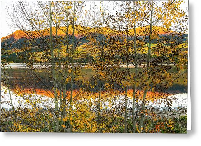Greeting Card featuring the photograph In Early Morning Light by Tim Reaves
