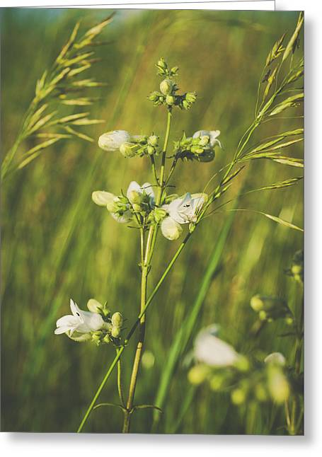 Greeting Card featuring the photograph In Fields Of Gold by Christi Kraft