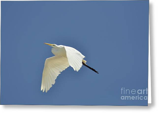 In Flight Greeting Card by Clayton Bruster