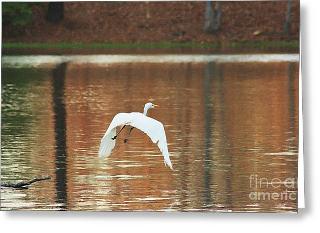 Greeting Card featuring the photograph In Flight by Kim Henderson