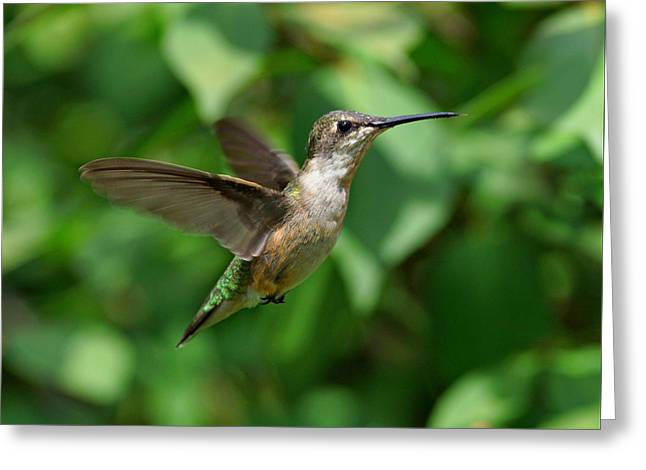 In Flight Greeting Card by Sandy Keeton