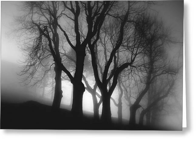 In Fog Greeting Card by Peter Mlynarcik