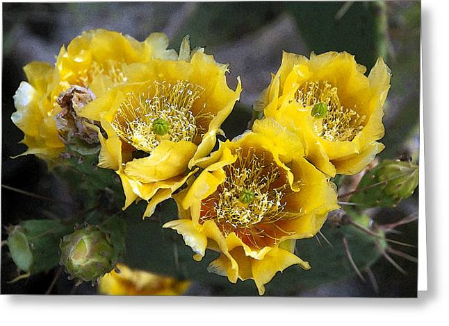 Prickly Greeting Cards - In Full Bloom Greeting Card by Robert Anschutz