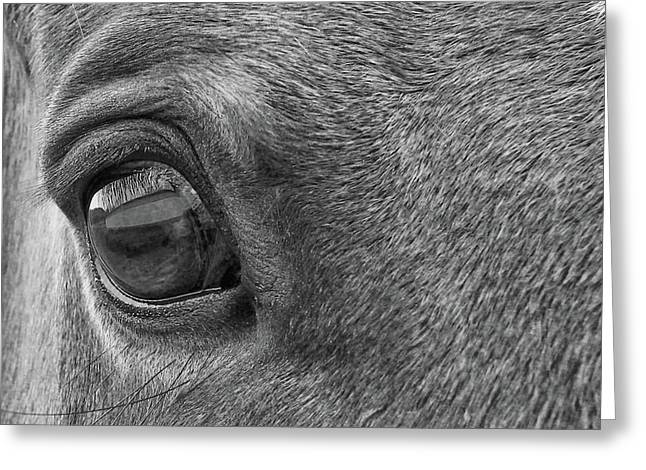 In Italian Cavallo View Greeting Card by JAMART Photography