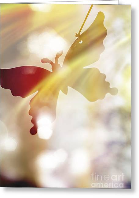 In Light Of Clipped Wings Greeting Card