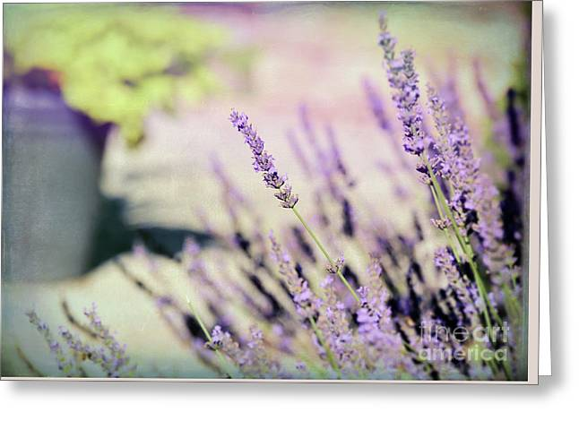Greeting Card featuring the photograph In Love With Lavender by Kerri Farley