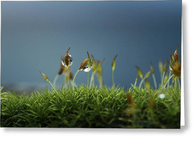 In Moss World .. Rain Greeting Card by Connie Handscomb