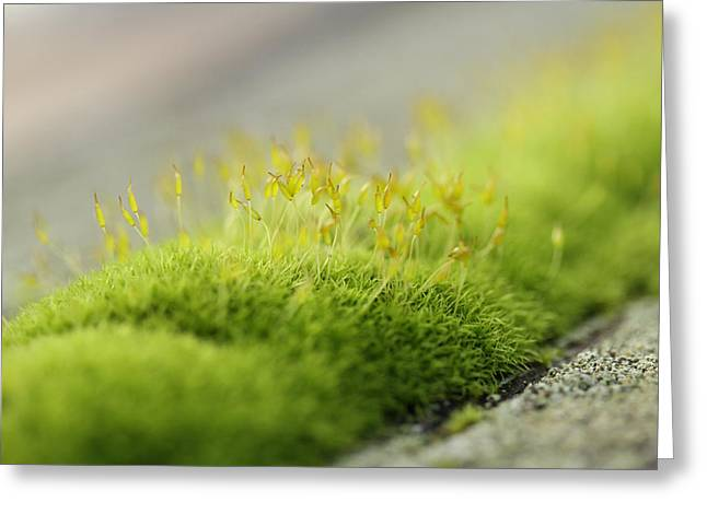 In Moss World .. Sunshine On The Ridge Greeting Card by Connie Handscomb