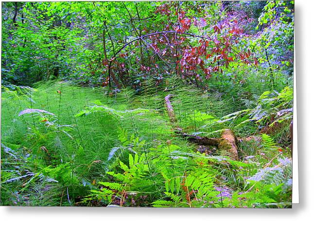 Greeting Card featuring the photograph In Muir Woods A Fallen Tree Surrenders To The Forest Ferns by Don Struke