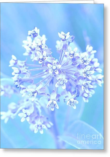 In Pastel   Greeting Card by Tara Lynn