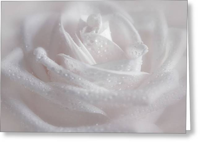 In Pink Tones Greeting Card