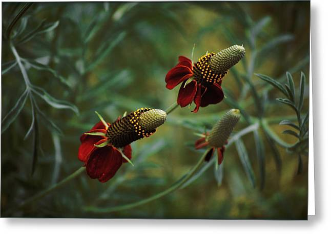 Greeting Card featuring the photograph In Rousseaus Garden by Douglas MooreZart