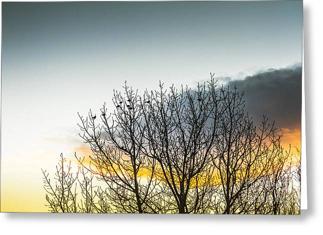 In Silhouette Of Birds And Twigs Greeting Card by Jorgo Photography - Wall Art Gallery