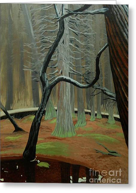In The Atlantic White Cedar Swamp Greeting Card by Robert Coppen