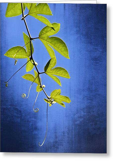 Greeting Card featuring the photograph In The Blue by Carolyn Marshall