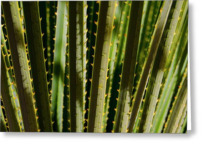 In The Cactaceae Weeds Greeting Card