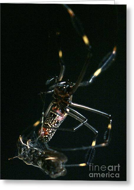 In The Claws Of A Spider Greeting Card by Mopics