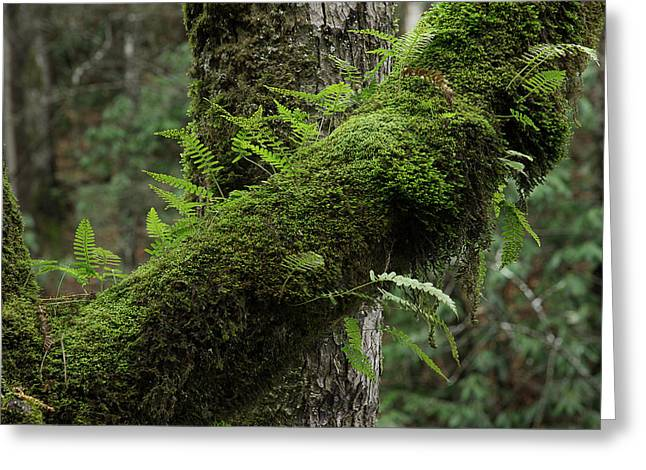 Greeting Card featuring the photograph In The Cool Of The Forest by Mike Eingle