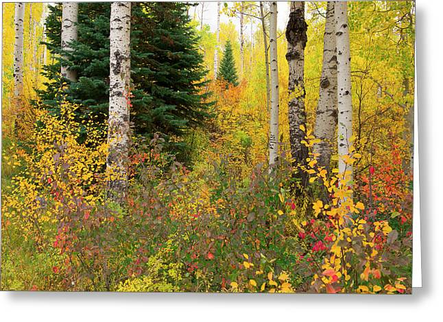 Greeting Card featuring the photograph In The Depths Of Autumn Woods by Tim Reaves
