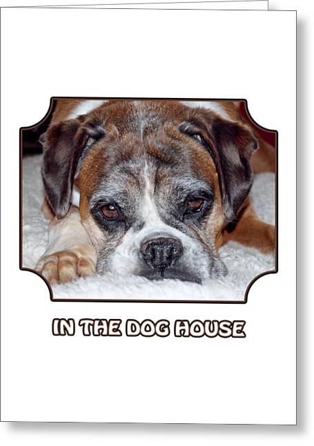 In The Dog House - White Greeting Card by Gill Billington