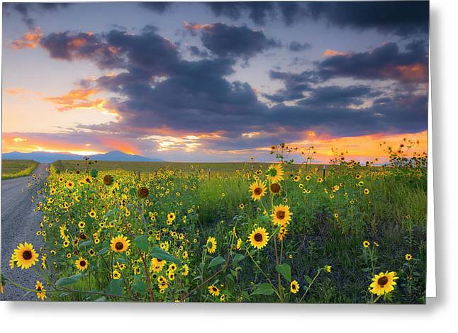 Greeting Card featuring the photograph In The Evening Light by Tim Reaves