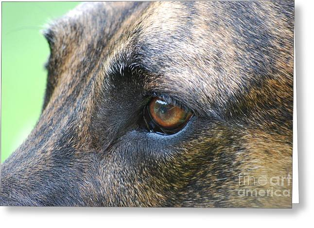 In The Eyes Of A Dog Greeting Card by Lila Fisher-Wenzel