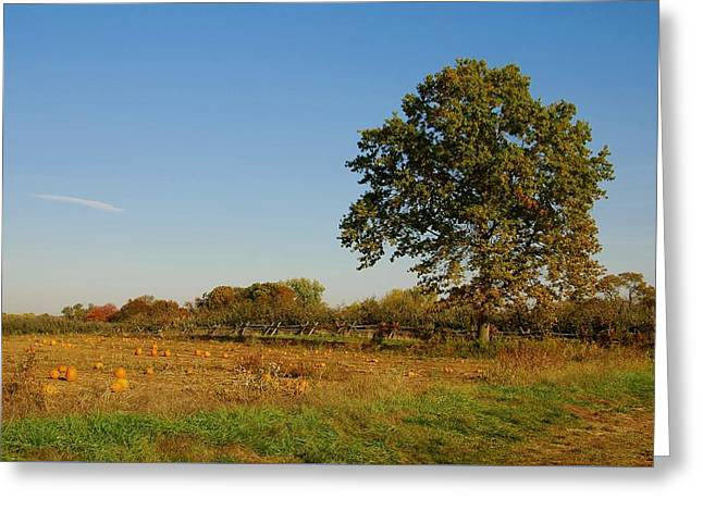 In The Field - Battlefield Orchards Greeting Card