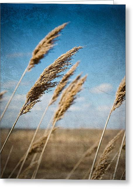In The Field Greeting Card by Michel Filion