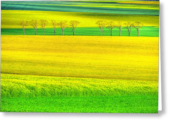 In The Fields Of Gold Greeting Card