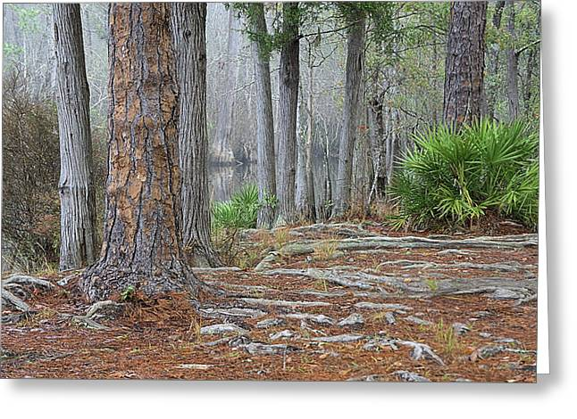 In The Florida Pines Greeting Card by Tyler Findley