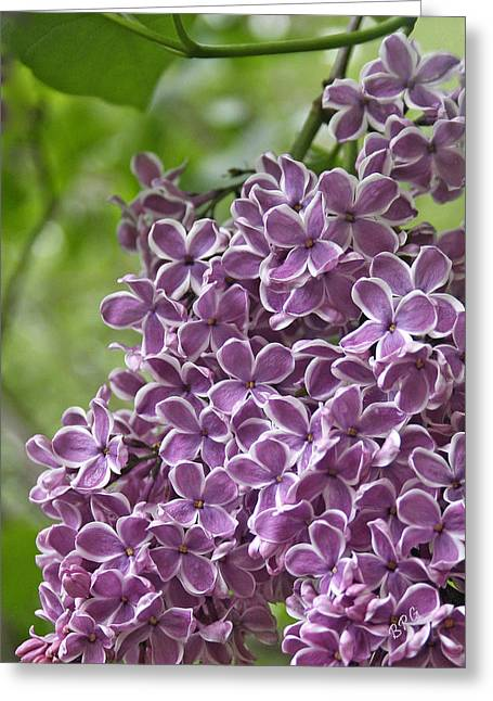In The Garden. Lilac Greeting Card by Ben and Raisa Gertsberg